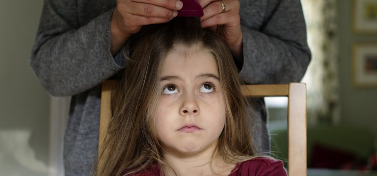 How to Get Ahead of Head Lice