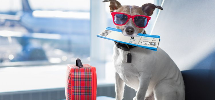 Are you planning on travelling abroad with your pet this summer?