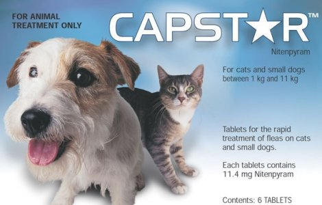Capstar Flea Treatment for Small Dogs and Cats 1-11kg Pack of 6